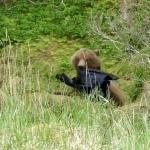 Bear & Jacket A3