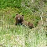 Bear & Jacket A4