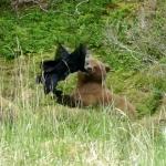 Bear & Jacket A2